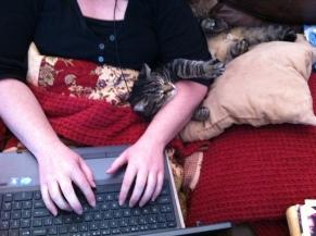 writing novella w cat