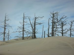 Oregon_Dune_Tree_Tree_Skeletons_byRobinWoods